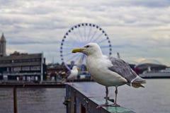 Mer fåglar av pir 57 Arkivfoton