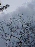 Mer fåglar en Royaltyfri Bild