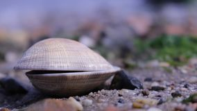Mer fermée Shell Close Up images stock