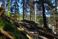 Mer grosser Arber ser, övervintrar landskap runt om Bayerisch Eisenstein, skidar semesterorten, den bohemiska skogen (Šumava), Tys Royaltyfri Bild