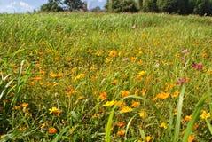 Mer gul gräsfält Arkivfoto