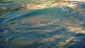 Mer Lion Basking In The Sea clips vidéos