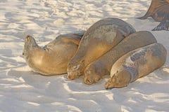 Mer Lion Friends Forever Image stock