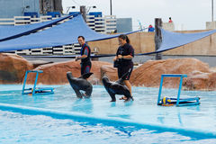 Mer Lion Show en parc d'océan de Manille Photographie stock libre de droits