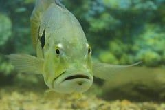 Mer lumineuse brillante de rivière d'eaux de pêche occean Image libre de droits