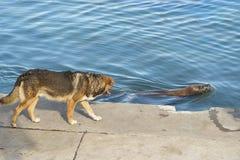 Mer Lyon et chien Photographie stock