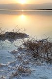 Mer morte - Bush défraîchi à l'aube Photographie stock