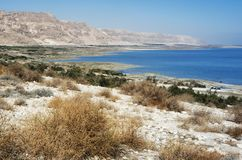Mer morte en Israël Photos libres de droits