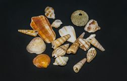 Mer naturelle Fosils Shell photographie stock libre de droits