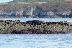 Mer occidentale du Pays de Galles photos libres de droits
