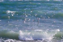 Mer, onde, mouettes Photos libres de droits