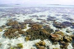 Mer ouverte et coraux peu profonds Image libre de droits