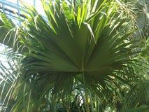 Mer palmier blad royaltyfri bild