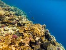 Mer profondément ou océan sous-marin avec le récif coralien comme fond photographie stock libre de droits