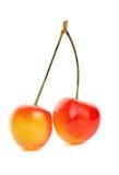 mer regnig Cherry Royaltyfria Bilder
