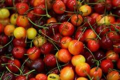 mer regnig Cherry royaltyfria foton