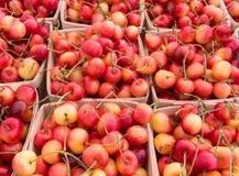 Mer regnig Cherry Arkivfoton