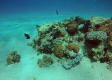 mer rouge de corail de récif Photos stock