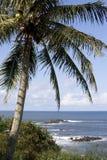 Mer Scape d'arbre de noix de coco photos stock
