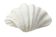 Mer Shell image stock