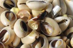 Mer Shell photos stock