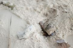 Mer Shell Alive images stock