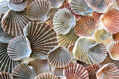 Mer Shell Background 3 images libres de droits