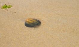 Mer Shell en sable images libres de droits