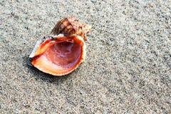 Mer Shell et pierres image stock