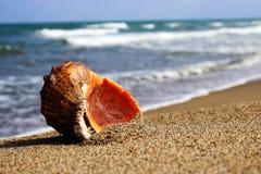 Mer Shell et pierres photo stock