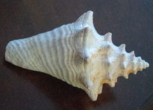 Mer Shell Images image libre de droits