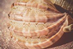 Mer Shell Macro Retro images libres de droits