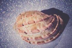 Mer Shell Macro Retro photographie stock
