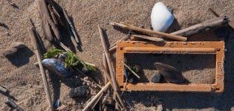 Mer Shell sur Sandy Shore avec d'autres objets Image libre de droits