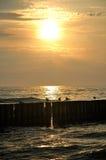 Mer, soleil, et mouettes photos libres de droits