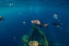 Mer sous-marine avec l'épave tropicale de poissons et de bateau dans Bali image stock