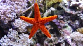 Mer sous tension Photo libre de droits
