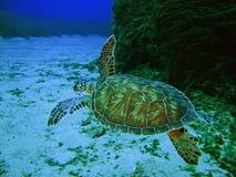 Mer Tertles Image libre de droits