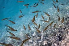 Mer tropicale Photo stock