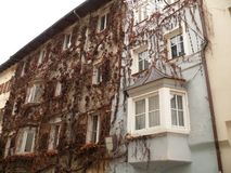 Merano, Trentino, Italie Fa?ade couverte d'usine s'?levante images libres de droits