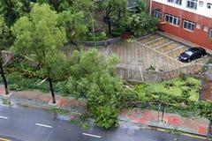 Meranti тайфуна приземлилось в город xiamen, фарфор Стоковые Изображения