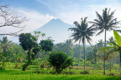 Merapi volcano 1. Picture was taken in Central Java, Indonesia stock image
