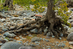 Meraviglia alle meraviglie naturali di Sedona Arizona U.S.A. Immagine Stock