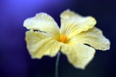 Meraviglia gialla Fotografie Stock