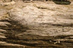 Meraviglie della natura fotografia stock