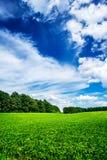 Meraviglioso delle piante della soia negli agricoltori coltivati sistemano Immagine Stock Libera da Diritti