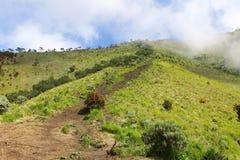 Merbabu mountain. Safana in merbabu mountain is beautiful Royalty Free Stock Images
