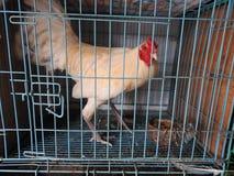 Mercado animal em Bali Indonésia Imagem de Stock Royalty Free