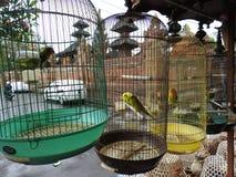 Mercado animal em Bali Indonésia Imagens de Stock Royalty Free