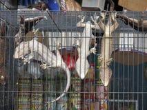 Mercado animal em Bali Indonésia Fotografia de Stock
